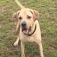 Adopt A Pet :: Lio - Columbia, SC