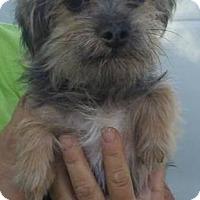Adopt A Pet :: Copper - Las Vegas, NV