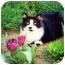Photo 1 - Domestic Mediumhair Cat for adoption in Brea, California - Ollie