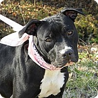 Adopt A Pet :: Bashful - Princeton, KY