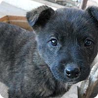 Adopt A Pet :: Esther - dewey, AZ