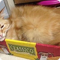 Adopt A Pet :: Albert E. Cat - Dallas, TX