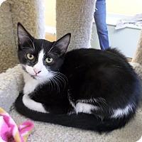 Adopt A Pet :: Carly - Lake Charles, LA