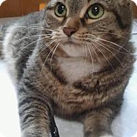 Adopt A Pet :: Luna - Witter, AR