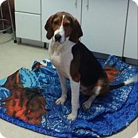 Adopt A Pet :: Walker - Shelter Island, NY