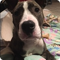 Adopt A Pet :: Emme - Cherry Hill, NJ