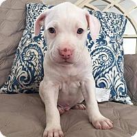Adopt A Pet :: Mike - Greensboro, NC