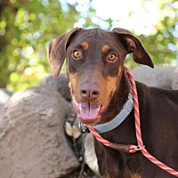 Adopt A Pet :: Garnet - Fillmore, CA