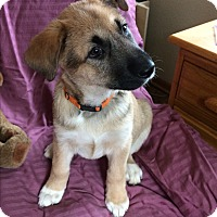 Adopt A Pet :: Quandry - Evergreen, CO