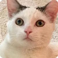 Adopt A Pet :: Jude Law - New York, NY