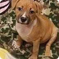 Adopt A Pet :: Pocahontas - Woodstock, GA