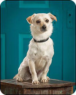 Chihuahua/Pug Mix Dog for adoption in Owensboro, Kentucky - Princess