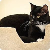 Adopt A Pet :: Dash - Trevose, PA