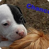 Adopt A Pet :: Chance - Cypress, CA