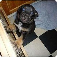 Adopt A Pet :: Rocky - Pointblank, TX
