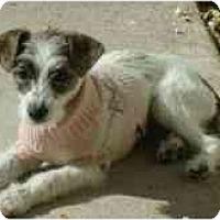Adopt A Pet :: Carly - Phoenix, AZ