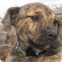 Adopt A Pet :: MOCHA - Plainfield, CT