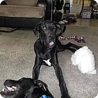 Adopt A Pet :: Cookie - Inver Grove Heights, MN