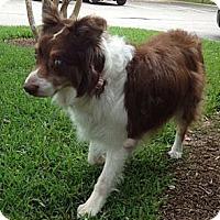 Adopt A Pet :: Addie - Abilene, TX