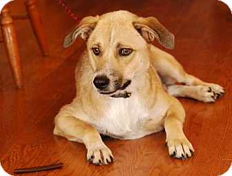 Terrier (Unknown Type, Small) Mix Puppy for adoption in Garland, Texas - Turq