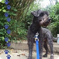 Adopt A Pet :: Benny~~ADOPTION PENDING - Sharonville, OH