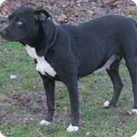 Adopt A Pet :: Midnight - Hillsboro, OH