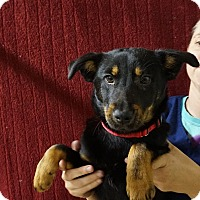 Adopt A Pet :: Elsa - Oviedo, FL