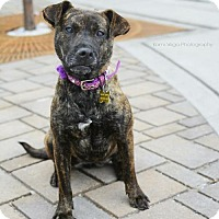 Adopt A Pet :: Iley - Salt Lake City, UT