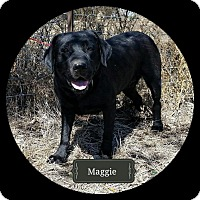 Adopt A Pet :: Maggie**Medical Hold** - Lincoln, NE