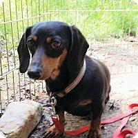 Adopt A Pet :: Putter - Lubbock, TX