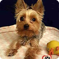 Adopt A Pet :: Lucy (no longer accepting applications) - Council Bluffs, IA