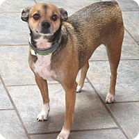 Adopt A Pet :: Micky & Iris - Allentown, PA