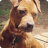 Adopt A Pet :: Kitsey - Starkville, MS