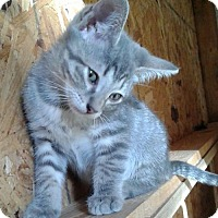 Adopt A Pet :: Daphne 17-0114 - Richardson, TX