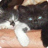 Adopt A Pet :: Gomer & Guppy - Kensington, MD