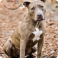 Adopt A Pet :: Tinkerbell - Orlando, FL