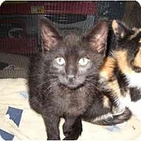 Adopt A Pet :: Scamp - Washington Terrace, UT