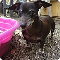 Adopt A Pet :: Monty - North Hollywood, CA