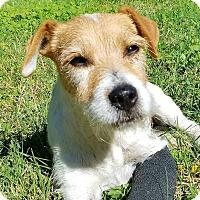 Adopt A Pet :: HOLLY - Terra Ceia, FL
