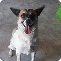 Adopt A Pet :: Caramel - San Antonio, TX