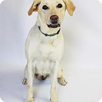 Adopt A Pet :: Sadie - Yucaipa, CA