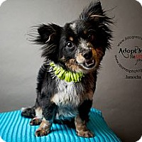 Adopt A Pet :: Jamocha - Shawnee Mission, KS