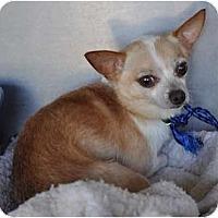 Adopt A Pet :: Vinnie - Estes Park, CO