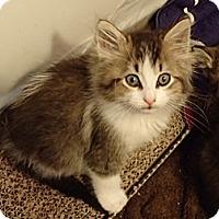 Adopt A Pet :: Hector - Hayward, CA
