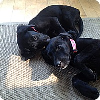 Adopt A Pet :: Mulan - Cumming, GA