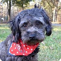 Adopt A Pet :: Happy - Mocksville, NC