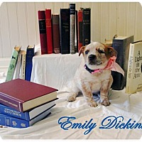 Adopt A Pet :: Emily Dickinson - Austin, TX
