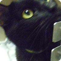 Adopt A Pet :: Cole - Hamburg, NY