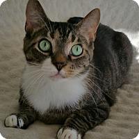 Adopt A Pet :: MemphisMcPurr - Carlisle, PA