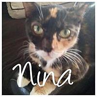 Adopt A Pet :: Nina - Brandon, FL
